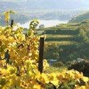 Weingarten © Stift Mattsee