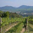 Blick vom Weingarten des Stiftes auf Mautern. Links im Hintergrund das Stift Göttweig. © Stift Mattsee